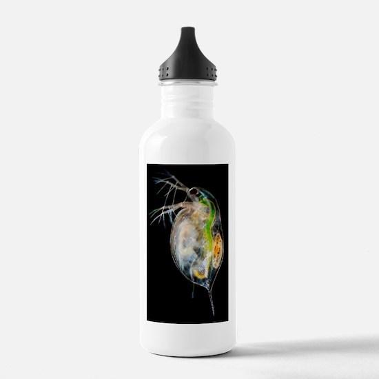 Water flea Water Bottle
