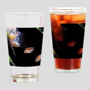 Water flea giving birth Drinking Glass