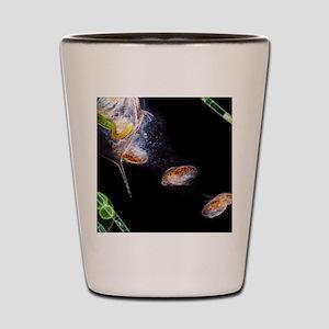 Water flea giving birth Shot Glass