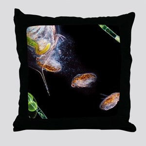 Water flea giving birth Throw Pillow