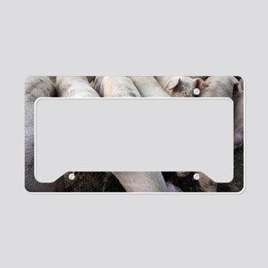 Pigs License Plate Holder