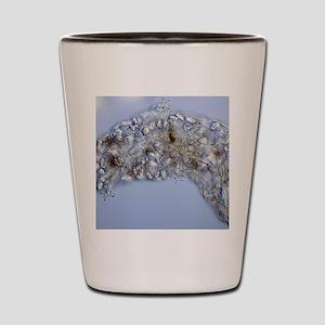 Water bear, light micrograph Shot Glass