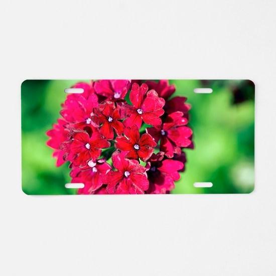 Verbena 'Claret' Aluminum License Plate