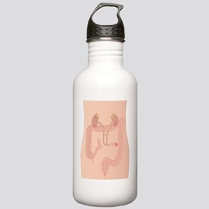 Urostomy procedure, ar Stainless Water Bottle 1.0L