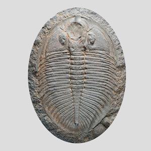 Trilobite fossil Oval Ornament