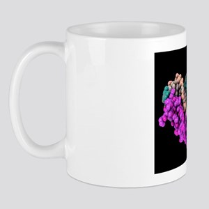 Transcription factor and ribosomal RNA Mug