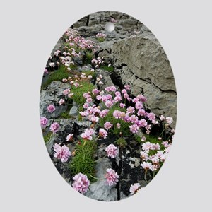 Thrift (Armeria) Oval Ornament