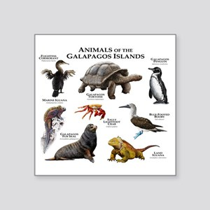 "Animals of the Galapagos Is Square Sticker 3"" x 3"""