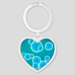 MRSA bacteria, artwork Heart Keychain