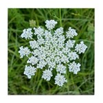 Queen Anne's Lace Tile Coaster