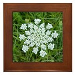 Queen Anne's Lace Framed Tile