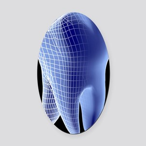 Molar tooth Oval Car Magnet