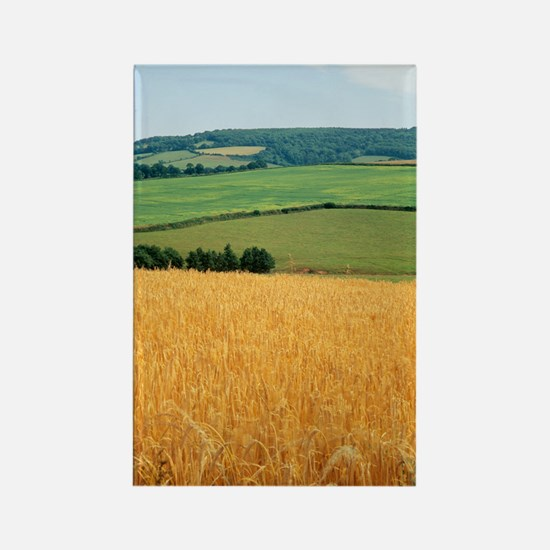 Wheat field Rectangle Magnet