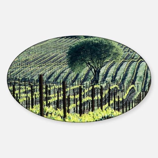 Vineyard Sticker (Oval)