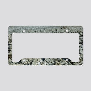 Selenite crystals on a dried  License Plate Holder