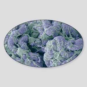 Kidney glomerulus, SEM Sticker (Oval)