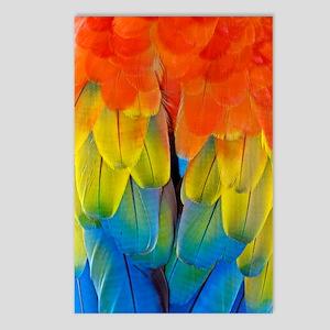 Scarlet macaw plumage Postcards (Package of 8)