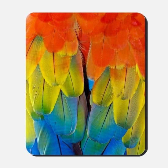 Scarlet macaw plumage Mousepad