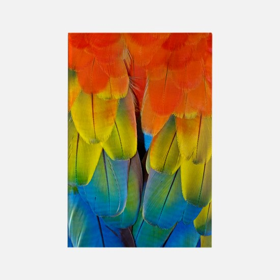 Scarlet macaw plumage Rectangle Magnet