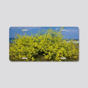 Sea Radish (Raphanus raphan Aluminum License Plate