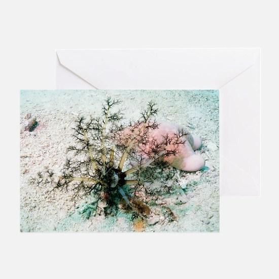 Sea cucumber and starfish Greeting Card