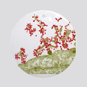Influenza viruses, TEM Round Ornament