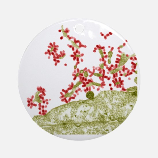 Influenza viruses, TEM Round Ornament