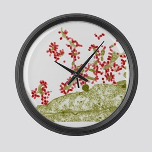 Influenza viruses, TEM Large Wall Clock