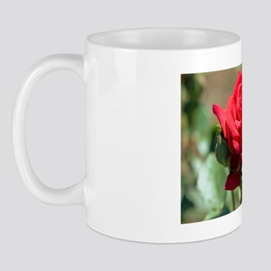Rose (Rosa 'National Trust' ) Mug