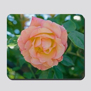 Rose (Rosa 'Della Balfour Harblend') Mousepad