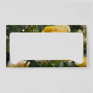 Rose (Rosa 'Charlotte Auspoly License Plate Holder