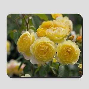 Rose (Rosa 'Charlotte Auspoly') Mousepad