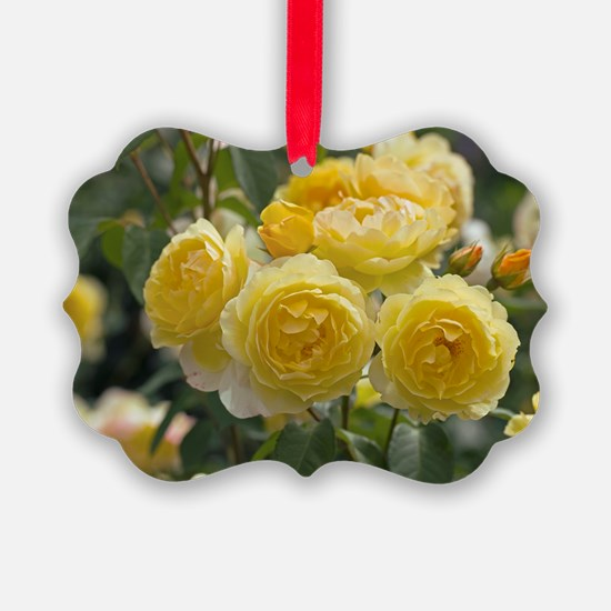 Rose (Rosa 'Charlotte Auspoly') Ornament