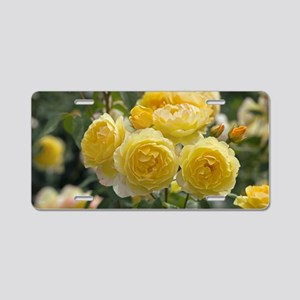 Rose (Rosa 'Charlotte Auspo Aluminum License Plate
