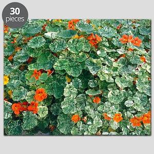 Tropaeolum majus 'Spitfire' flowers Puzzle
