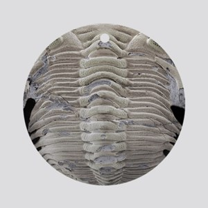 Trilobite fossil, SEM Round Ornament