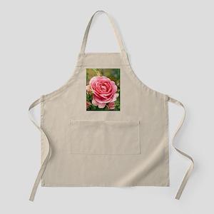 Rose (Rosa 'Parade') Apron