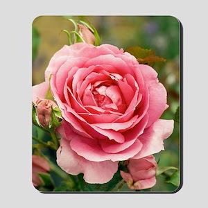 Rose (Rosa 'Parade') Mousepad