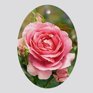 Rose (Rosa 'Parade') Oval Ornament