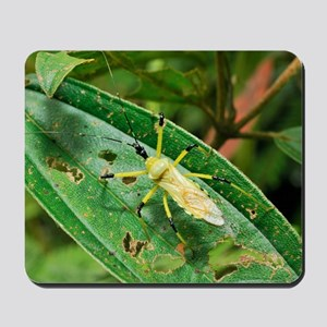Tropical insect Mousepad