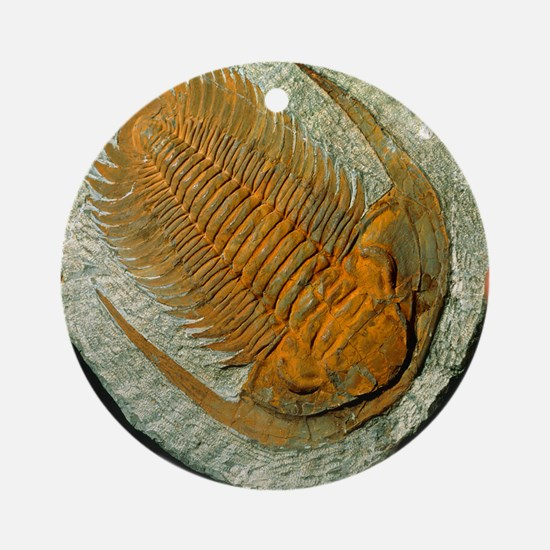 Trilobite fossil Round Ornament