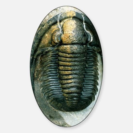 Trilobite fossil Sticker (Oval)