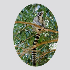 Ring-tailed lemur Oval Ornament