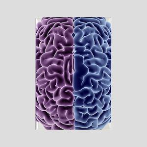 Human brain, computer artwork Rectangle Magnet