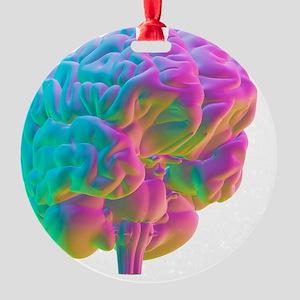 Human brain, computer artwork Round Ornament