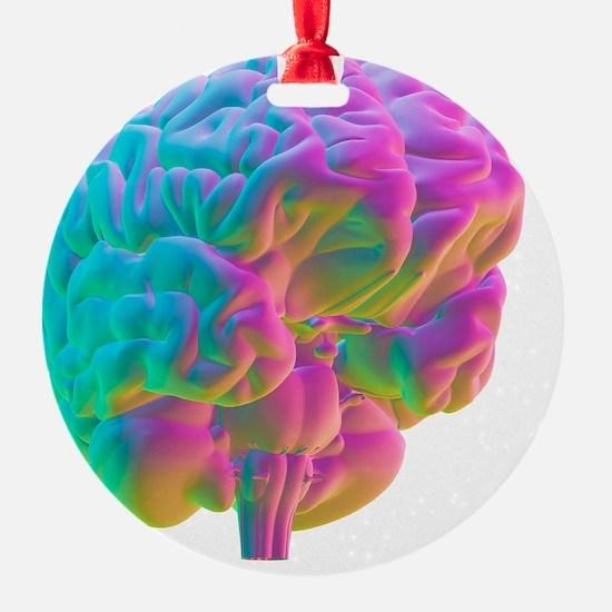 Human brain, computer artwork Ornament