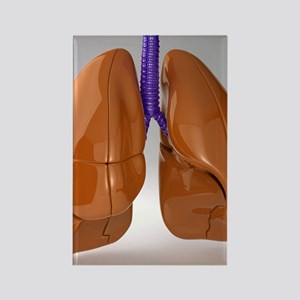 Respiratory system, artwork Rectangle Magnet