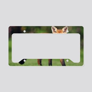 Red fox cub License Plate Holder