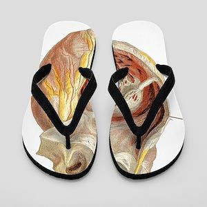 Heart anatomy, artwork Flip Flops
