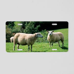 Texel sheep Aluminum License Plate